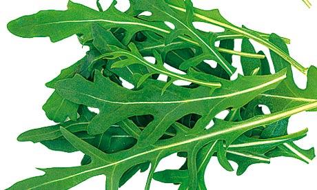 Pak Choi Rocket Salad Leaves Close Up